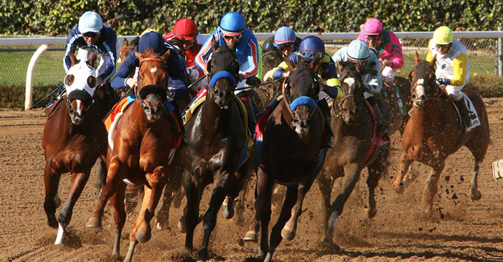 Equine race industry drug testing